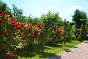 róże-